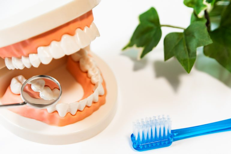 歯ブラシと模型